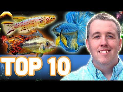 MY TOP 10 FISH FOR A 10 GALLON AQUARIUM