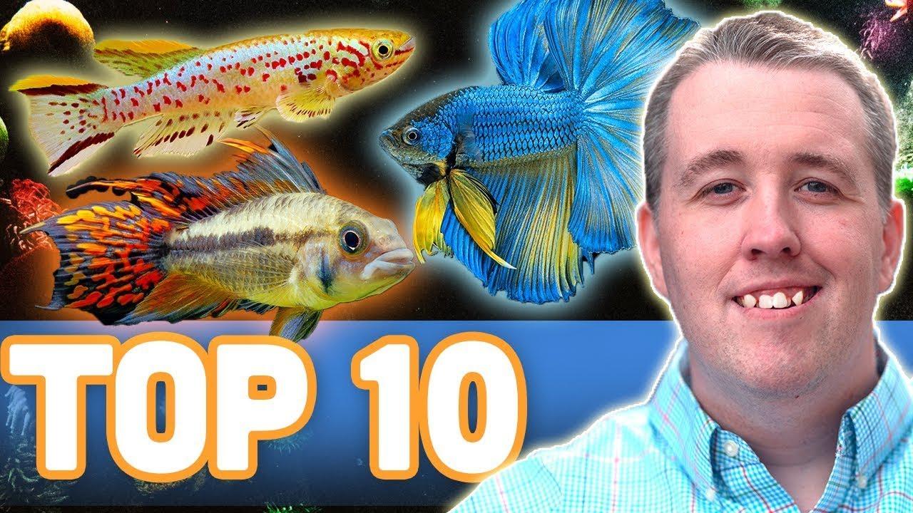my top 10 fish for a 10 gallon aquarium youtube