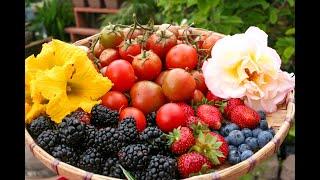June 2019 Harvest- Buhay Amerika #organicproduce #plantyourownfood #backyardgardening