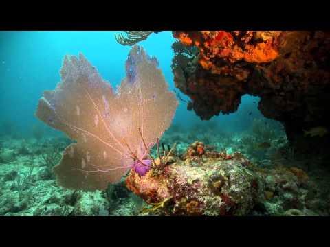 Caribbean Marine Etiquette PSA