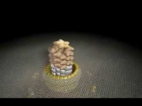 Bacterial Flagellum - Evolution