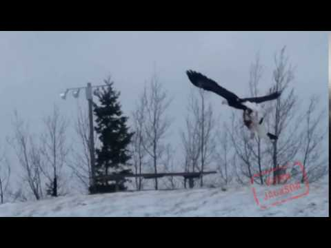 Eagle Flies off with... What?!?