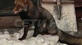 Змеи до смерти закусали молодую девушку на Ставрополье - YouTube