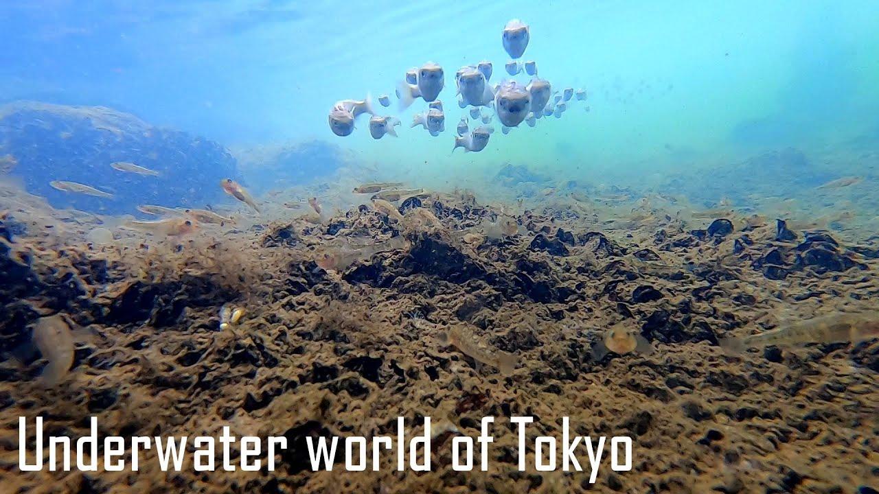 【東京スゲエ】都内でその辺の川にGoPro適当に入れてみたら
