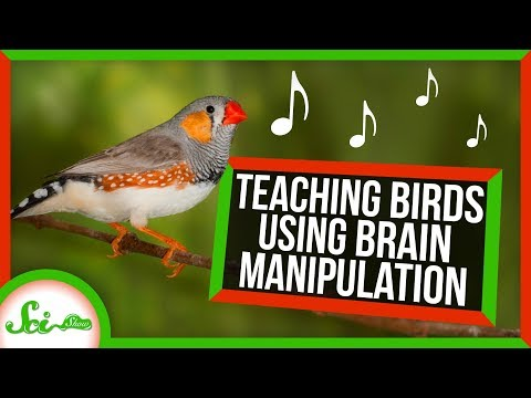 We Taught Birds to Sing by Altering Their Brains | SciShow News