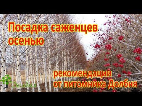 Осенняя посадка саженцев.