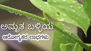 ಅಮೃತಬಳ್ಳಿಯ ಪ್ರಯೋಜನಗಳು | Uses of Amruthaballi Leaves in Kannada | Amruthaballi Benefits in Kannada