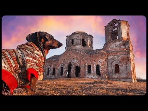 Treasure hunter dog! Funny dachshund video!