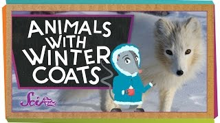 Animals with Winter Coats!