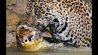 Необычное Поведение Животных
