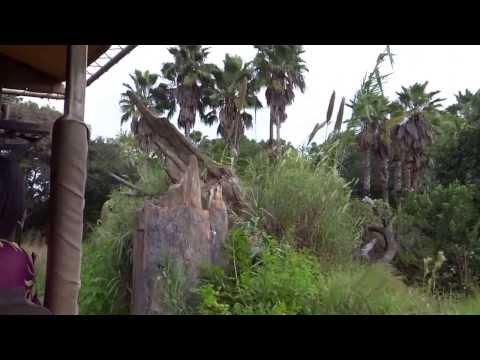 Animal Kingdoms African Safari!