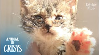 Kitten Trapped Inside A Pillar Wishes To Hold Mom's Hand Before She Dies | Animal in Crisis EP212