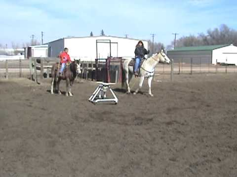 The Rope Uo Team Roping Steer In Action Youtube