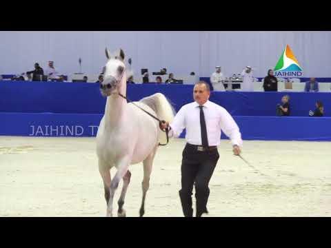 SHEIKH HAMDAN BIN RASHID AL MAKTOUM OPENS DUBAI INTERNATIONAL ARABIAN HORSE CHAMPIONSHIP & FAIR 2018