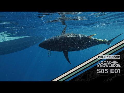 Pacific Bluefin Tuna Tagging S05 E01 Let It Go