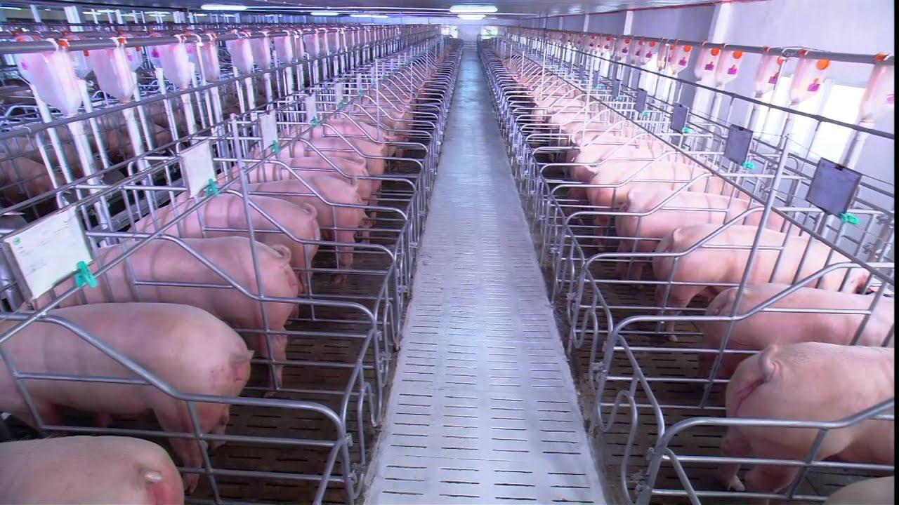 Giới thiệu Công ty Cổ phần Chăn nuôi C.P. Việt Nam | Vietnam Version