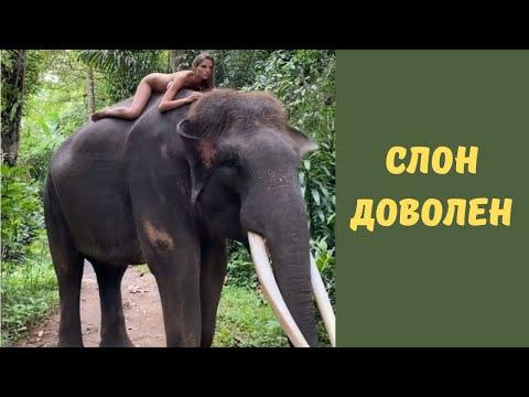 Голая Алеся Кафельникова забралась на слона