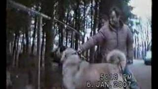 Repeat youtube video Kangal Ayi Boganlar