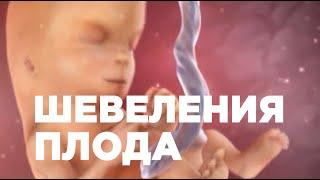 Шевеления Плода По Неделям Беременности. Ощущения Беременной.