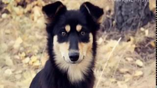 Собака Дворняга. Домашние животные