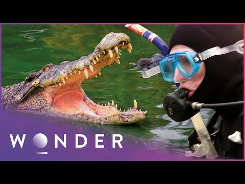 This Man Survived A Dangerous Alligator Attack | Human Prey S1 EP4 | Wonder