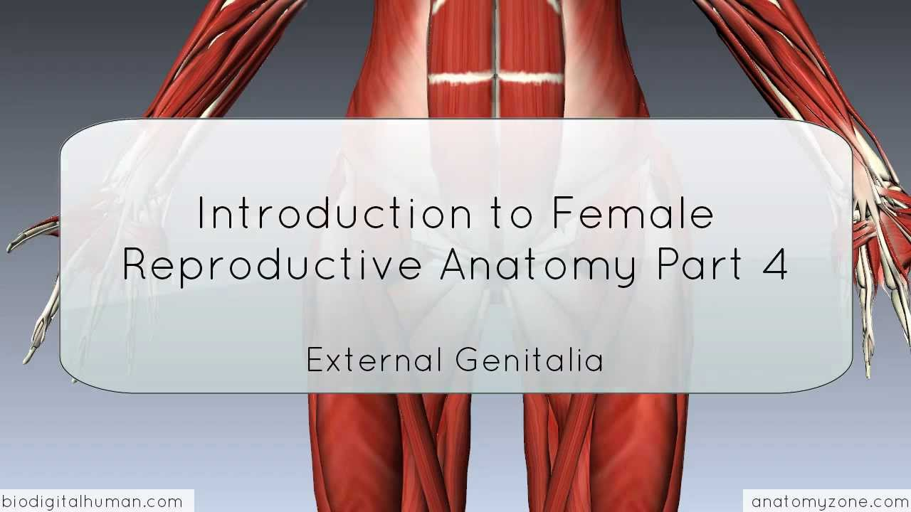 Introduction to Female Reproductive Anatomy Part 4 - External ...
