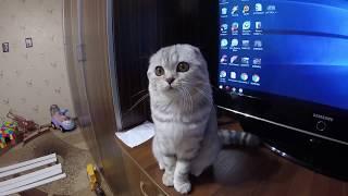 Простая Игрушка для Кошки Хлои Своими Руками 😻 Играем с Веселой Кошечкой Cat