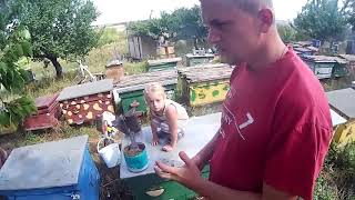 Доча 3 года на осмотре пчёл, любовь к пчёлам с детства