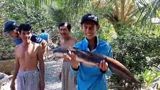 Thăm Câu Trúng Đậm Ổ Cá Sủ Và Con Cá Ngát Khổng Lồ # SĂN BẮT ĐỒNG THÁP #