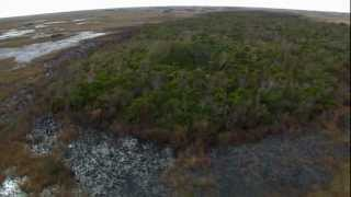 Everglades Mountains and Valleys: Tropical Hardwood Hammock