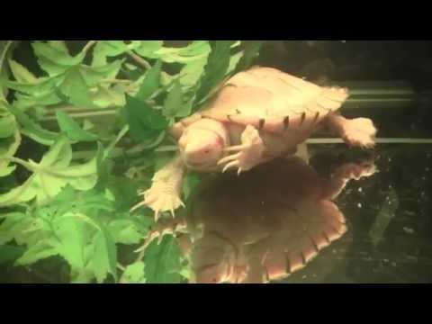 Feeding Turtles Feeder Fish