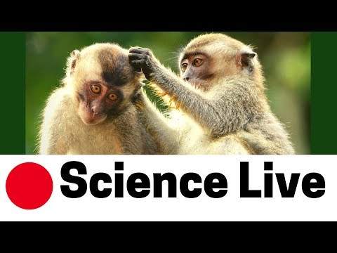 🔴 SCIENCE LIVE | Why Do Animals Help Each Other?