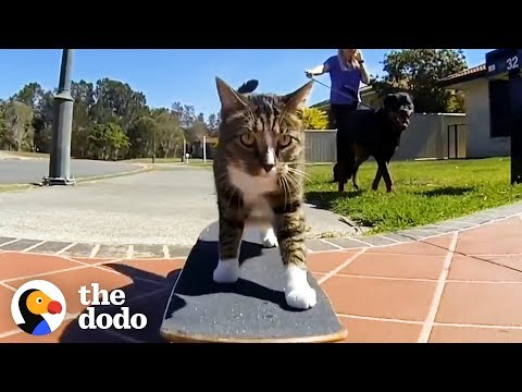 Most Talented Cats in the World | The Dodo