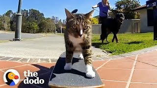 most-talented-cats-in-the-world-the-dodo