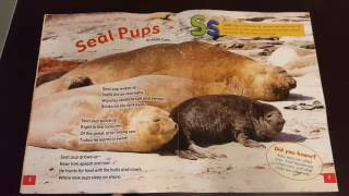 Zootles Seals March 2017 review