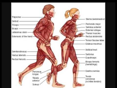 Anatomy, 9 Systeme, Vorrichtungen 6, 21 und Körperorganen - YouTube