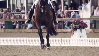 Развивает ветер вороную гриву | Конный спорт