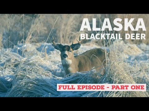 Alaska Blacktail Deer 1
