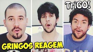 Baixar GRINGOS REAGEM - TriGO!