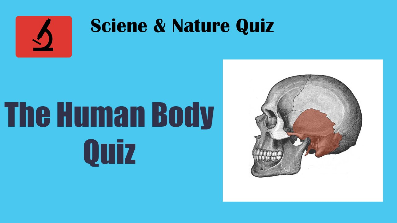 The Human Body Quiz Youtube