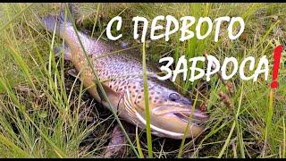Взял кумжу с первого заброса Рыбалка на реке Териберка Brown trout