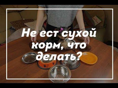 Что делать, если собака не ест сухой корм / щенок йорка / купить щенка