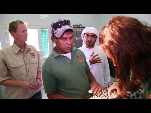 مركز حماية و إكثار الحيوانات العربية البرية المهددة بالانقراض - من برنامج في الشارقة