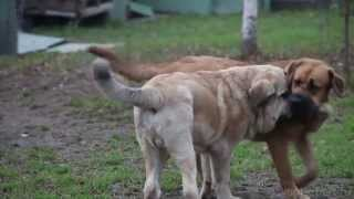 У животных тоже бывает аллергия. Говорит ЭКСПЕРТ.(, 2013-04-12T18:08:10.000Z)