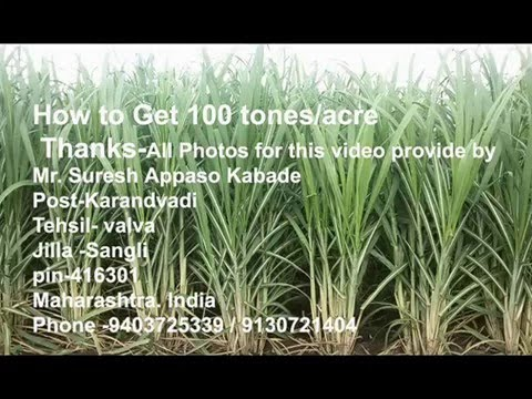 How to get 100 tones Sugarcane/Acre- Mr. Suresh Kabade