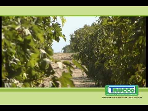 AJ Trucco - Fichi fresh figs from California