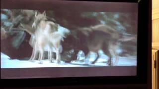 Kevin zegers eaten by wolves
