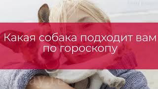 Какая собака подходит вам по гороскопу