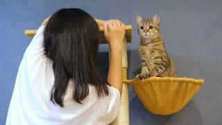 新しいキャットタワーの完成が待ちきれない猫!