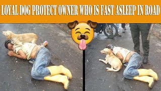 **AMAZING FOOTAGE** Loyal dog protect owner who is fast asleep in middle of road!